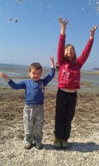 Školjke na obali